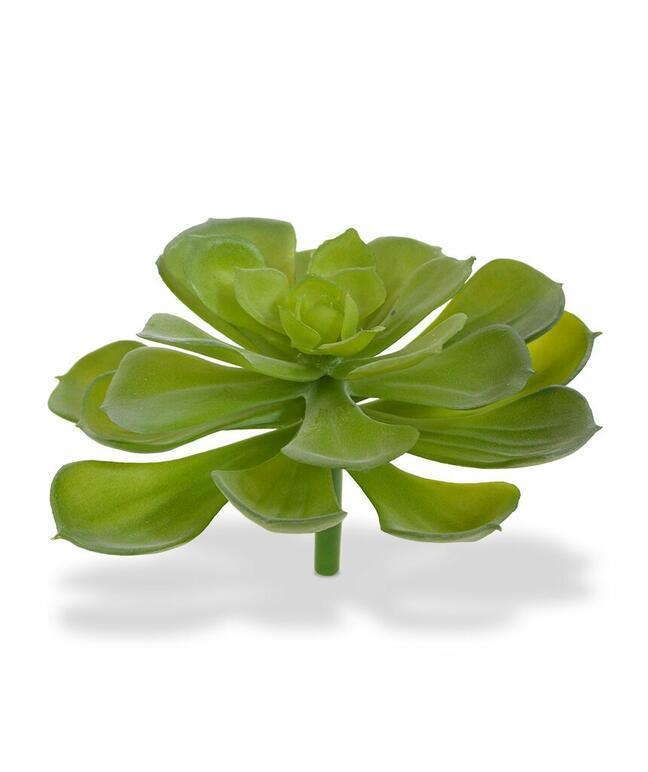 Umelá rastlina Eševéria štětinatá 10 cm