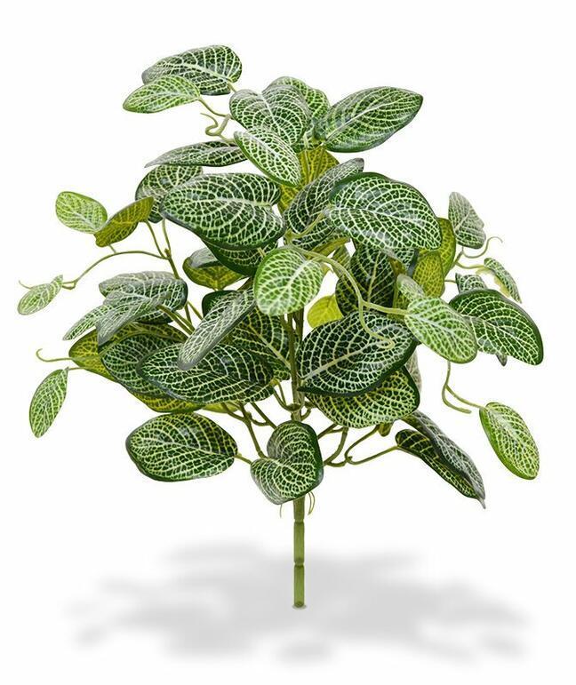 Umelá rastlina Fitónia 40 cm