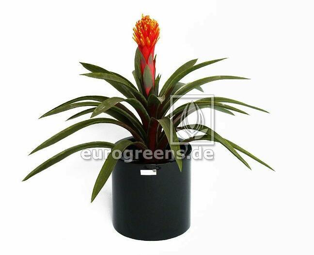 Umelá rastlina Guzmánia 65 cm