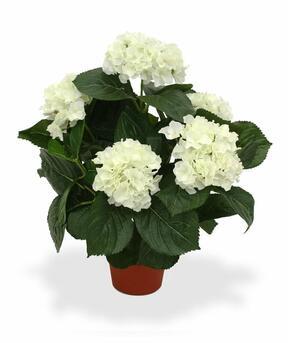 Umelá rastlina Hortenzia krémová 45 cm