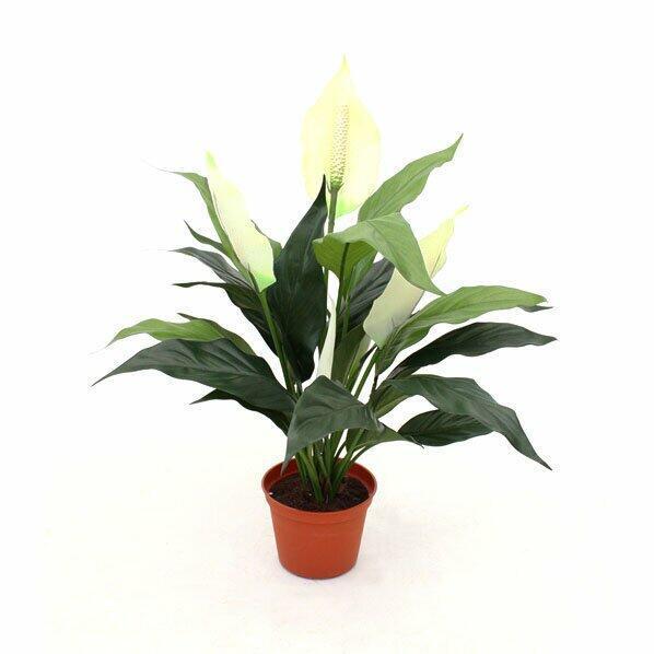 Umelá rastlina Lopatkovec 50 cm