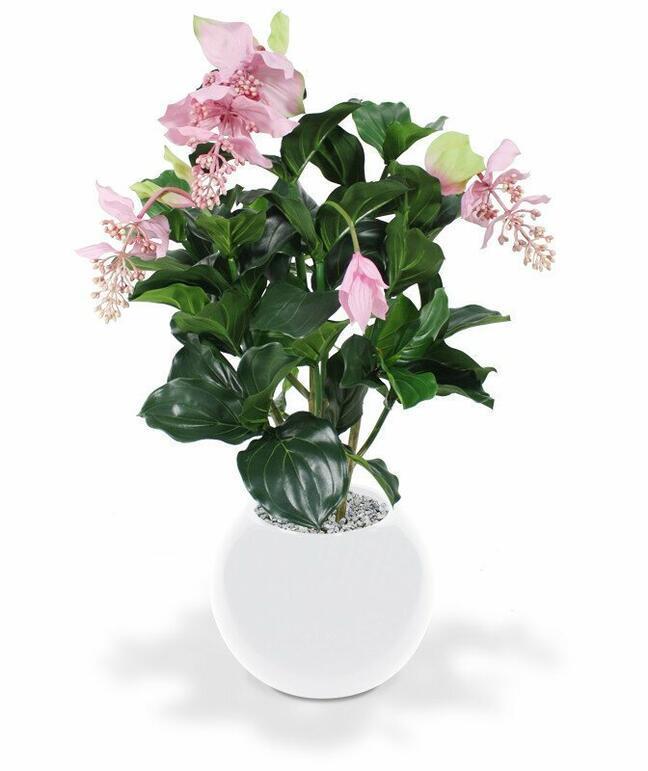Umelá rastlina Medinila nádherná 100 cm