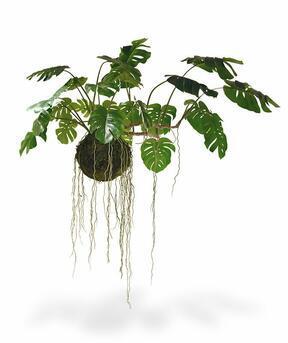 Umelá rastlina Monstera na machovej guli