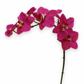 Umelá rastlina Orchidea fialová 80 cm