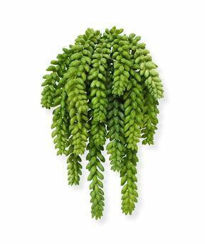 Umelá rastlina Rozchodník Morganov 30 cm