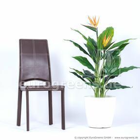 Umelá rastlina Strelícia kvitnúca 120 cm