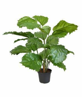Umelá rastlina Tetrastigma 40 cm