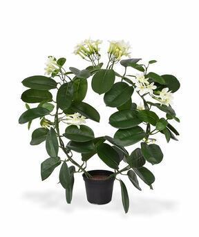 Umelá rastlina Vencovec kvetnatý 40 cm