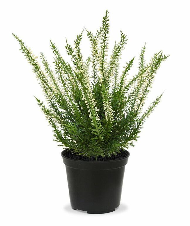 Umelá rastlina Vresovec krémový 25 cm