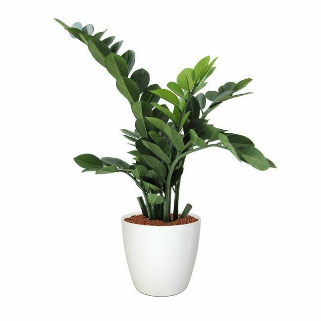 Umelá rastlina Zamiokulkas 65 cm
