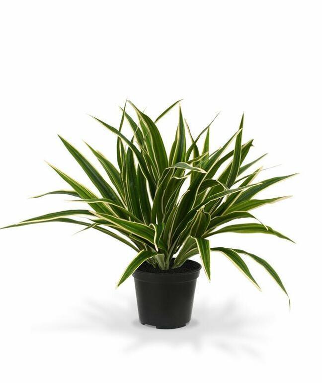 Umelá rastlina Zelenec 30 cm