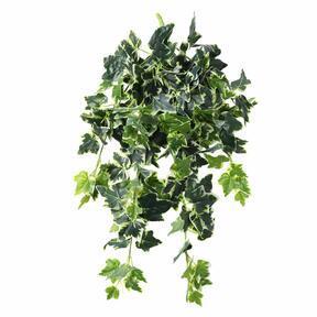 Umelá úponka Brečtan bielo-zelená 80 cm