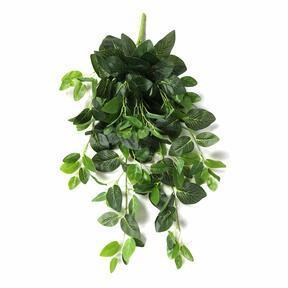 Umelá úponka Fitónia zelená 80 cm