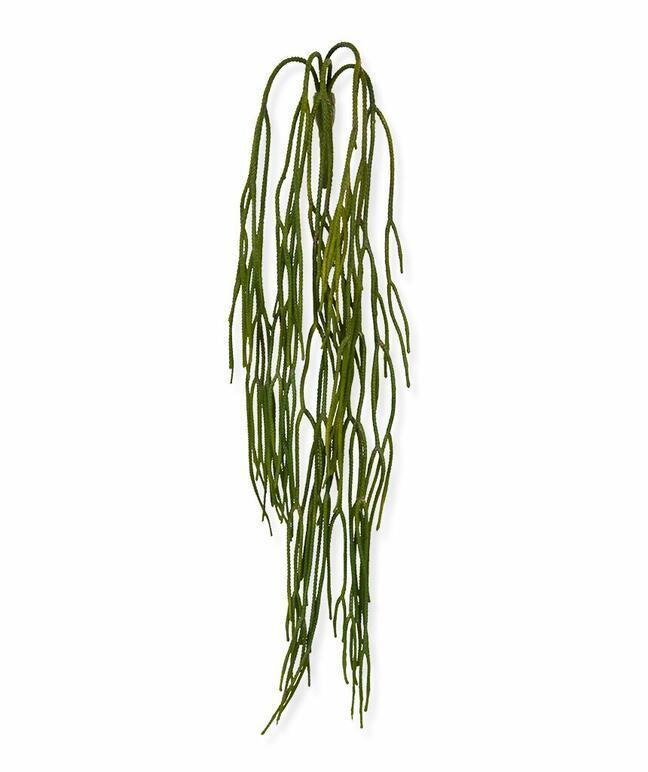 Umelá úponka Rhipsalis pilocarpa 65 cm