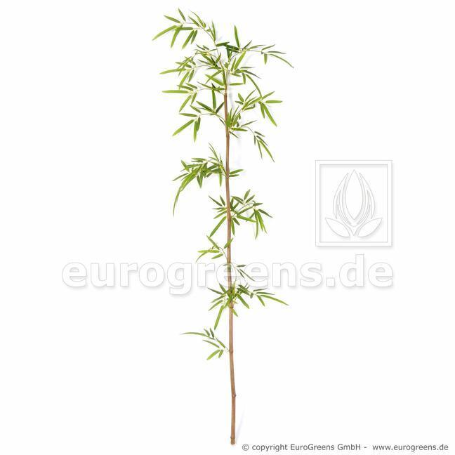 Umelá vetva Japonský Bambus 150 cm
