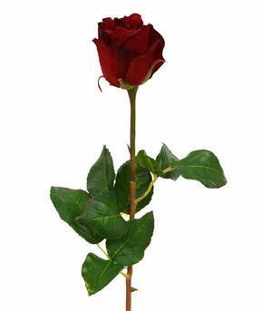 Umelá vetva ruža červená 52 cm