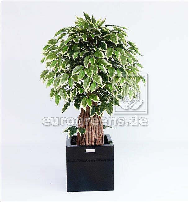 Umelý bonsai Fikus Liana 100 cm