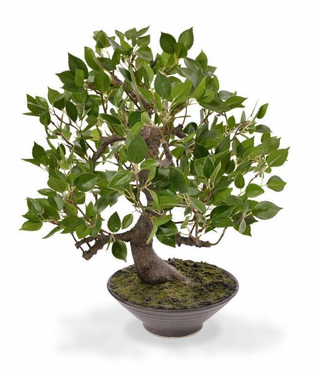 Umelý bonsai Fikus Wiandi 45 cm