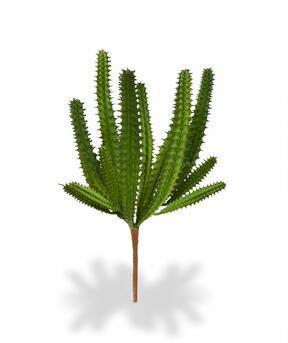 Umelý kaktus Euphorbia 20 cm