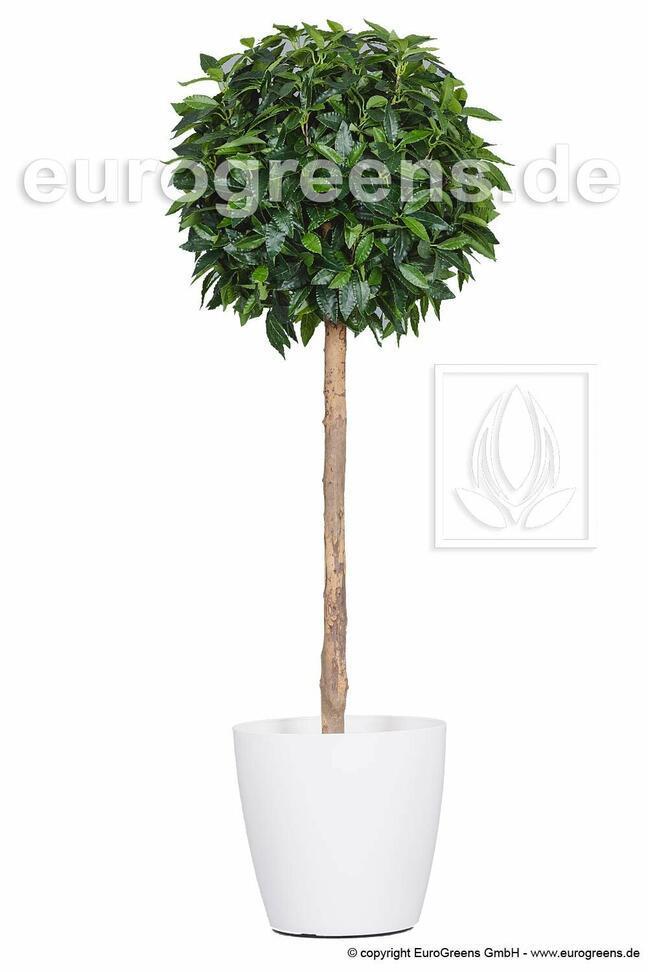 Umelý strom Vavrín pravý 140 cm