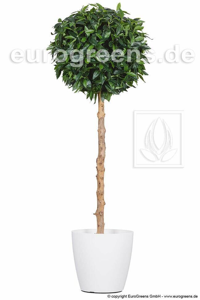 Umelý strom Vavrín pravý 160 cm